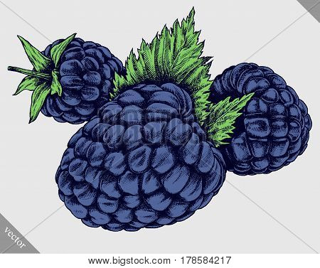 Engrave BlackBerry hand drawn graphic illustration vector art