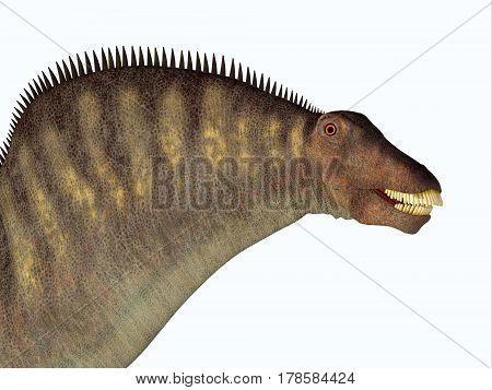 Amargasaurus Dinosaur Head 3d illustration- Amargasaurus was a herbivorous sauropod dinosaur that lived in Argentina in the Cretaceous Period.