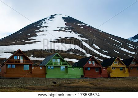 Foreground of arctic flowers and a row of very colorful homes in Longyearbyen, Svalbard, Norway.