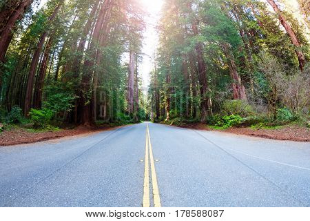 Long road through the Redwood National Park forests in California, USA