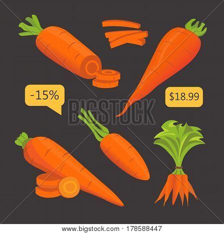 Set carrot vector illustration. Sliced fresh carrot