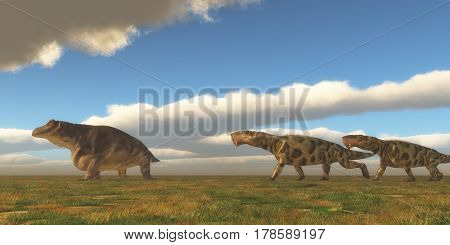 Permian Inostrancevia hunts Keratocephalus 3d illustration - Two Inostrancevia dinosaurs go after a Keratocephalus on a grassy plain in the Permian Period.