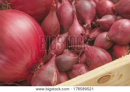 Small onions intended for planting in box