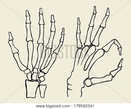 set of Skeleton hand, vector illustration isolated on beige