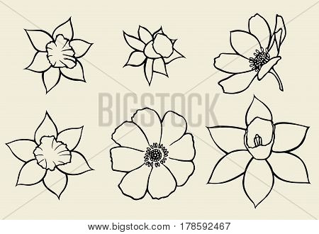 Set of flower isolated on white background, botanical hand drawn doodle sketch marigold, vector illustration for design package tea, cosmetic, natural medicine, greeting card, wedding invitation