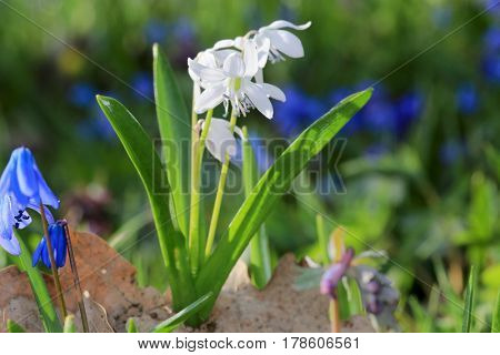 wild spring flowers in forest