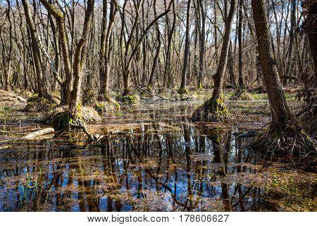 Spring day on bog in forest