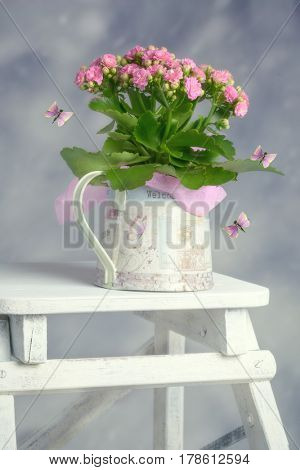 Pretty pink spring plant in watering can with stylised butterflies
