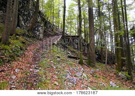 Travel To Sankt-wolfgang, Austria. A Path In The Green Mountains Forest.