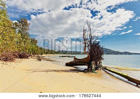 Dead tree trunk on tropical beach