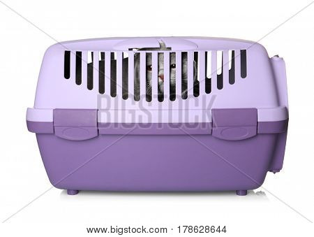 Cute funny cat in plastic carrier on white background