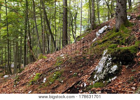 Travel To Sankt-wolfgang, Austria. The View On The Hill In The Green Mountains Forest.