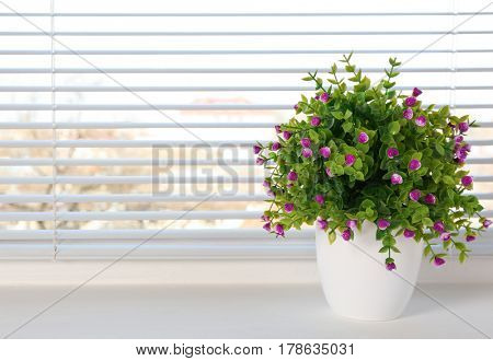 Beautiful home plant on windowsill