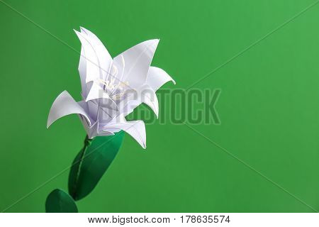 Beautiful paper lily on color background