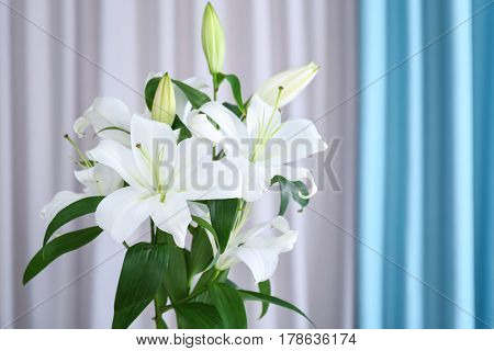 Beautiful white lilies on curtain background
