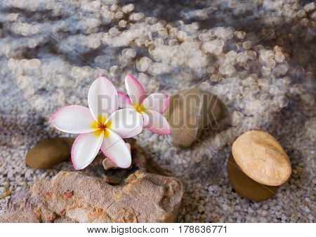 Flower plumeria or frangipani on green leaf and water