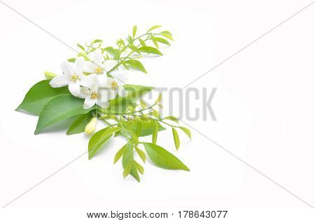 White Flowers Are Arranged To Look Beautiful.