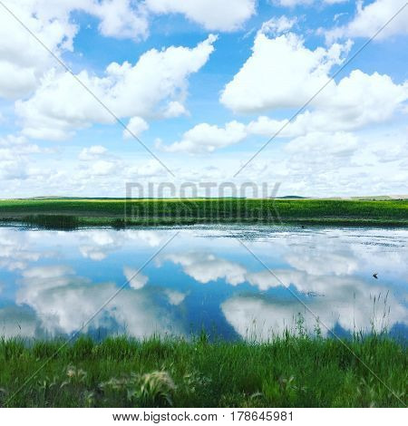 Field landscape in summer with lush green grass around water. Bright blue sky big white clouds and reflections in calm water.