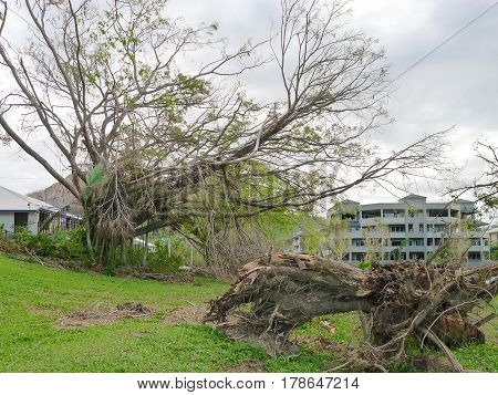 Damage and uprooted tree on The Strand in Townsville Queensland Australia after Cyclone Yasi in February 2011