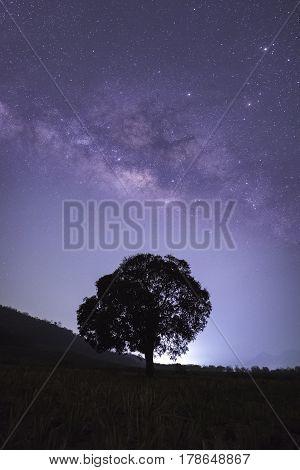 Alone tree with Milky way, Night sky