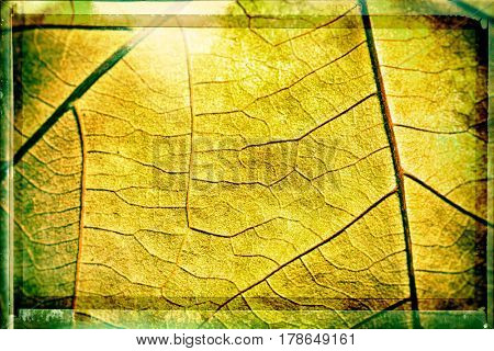 Leaf veins texture macro background
