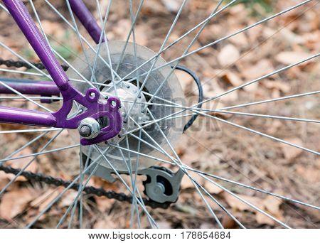 Bicycle rear hub purple frame and wheel