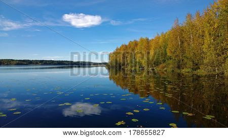 Beautiful forest and clouds reflected in calm lake bright in the fall. On the water floating water lilies