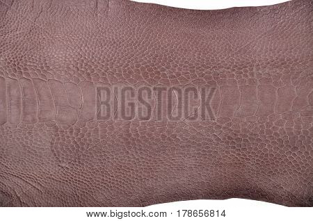 Ostrich leg leather isolated on a white background