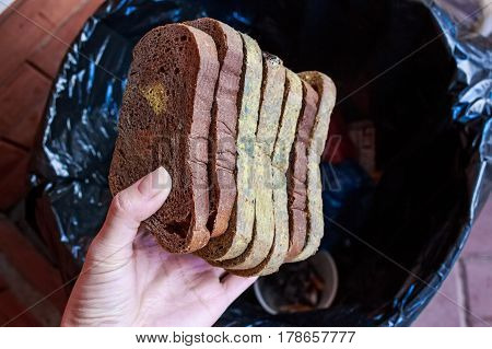 Close up of female hand holding slices of molded rye bread above garbage bin