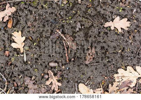Close up of brown soil and texturewith dry leaves