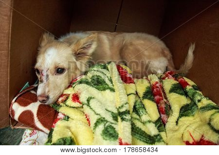 A cute homeless puppy sleeping in a box on colorful blankets