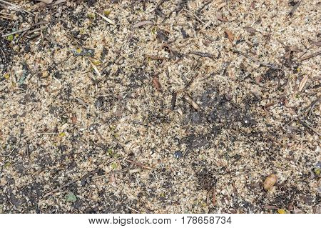 Closeup of texture of sawdust on the ground