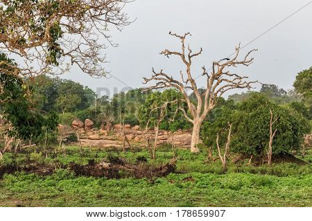 Scenic view with with dry dead tree in Yala National Park, Sri Lanka