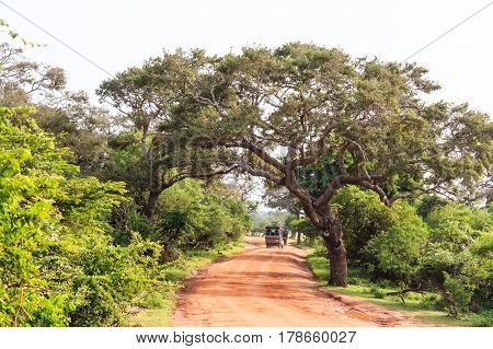 Scenic view with of road in Yala National Park, Sri Lanka