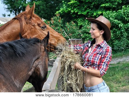 young attractive cowgirl feeding horses in the farm in summer day