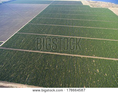 Aerial top view on extensive vineyards background