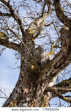 Grey Cat sitting on a tree concept Help and anxiety for a stucked pet