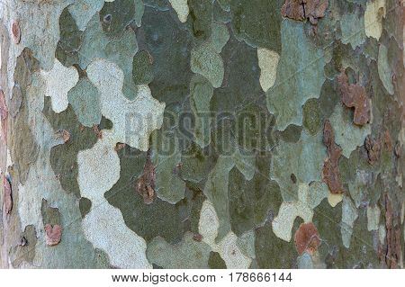 Tree Trunk Texture. Organic Natural Background