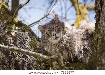 Feral cat sitting on a tree concept waiting for the fire department rescue and help