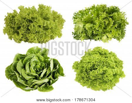 Fresh green lettuce isolated on white background. Set of different foreshortening.