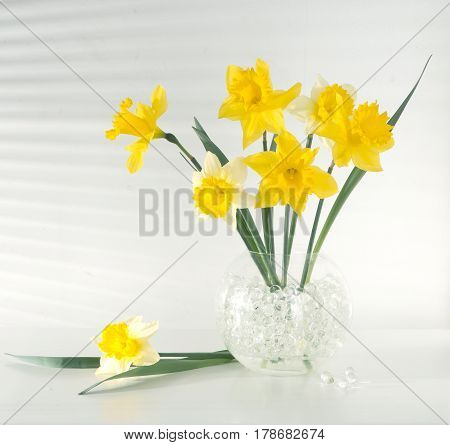 Beautiful flowers daffodils yellow and white on the table in the vase light from the window through the blinds gradation color shadow on the wall