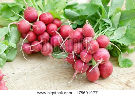 Fresh organic radish, bunch of red radishes on wooden table