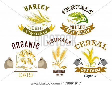 Wheat, rye, oat and millet icon set. Organic farm cereal plant and ear with ripe grains, decorated by ribbon banner for natural healthy food, agriculture and harvest themes design