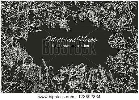Horizontal card template with vintage sketches of chalked medicinal herbs and flowers, dark background, vector illustration. echinacea, chamomile, lavender, calendula, clover, dandelion, st john's wort, plantain, dog rose and valeriana