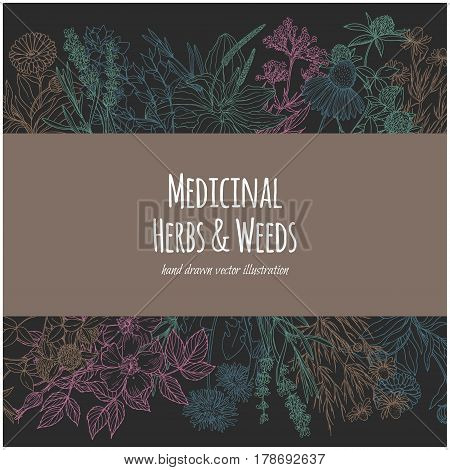 Horizontal  rectangular banner with color medicinal flowers and herbs on dark background, vector illustration, sketch style, echinacea, chamomile, lavender, calendula, clover, dandelion, st john's wort, plantain, dog rose and valeriana