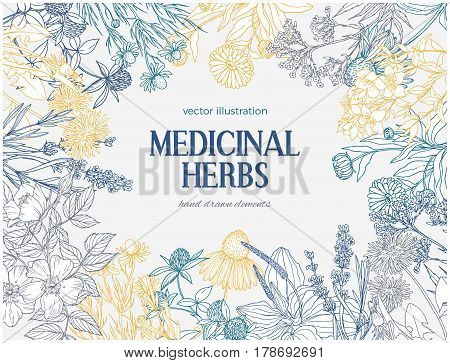 Rectangular card template with vintage sketches of medicinal herbs and flowers, place for text, white background, vector illustration. echinacea, chamomile, lavender, calendula, clover, dandelion, st john's wort, plantain, dog rose and valeriana