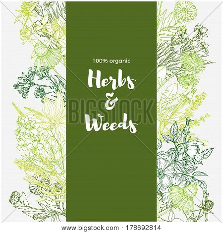 Vertical green banner with color medicinal herbs and flowers on white background, vintage sketch, vector illustration,  echinacea, chamomile, lavender, calendula, clover, dandelion, st john's wort, plantain, dog rose and valeriana