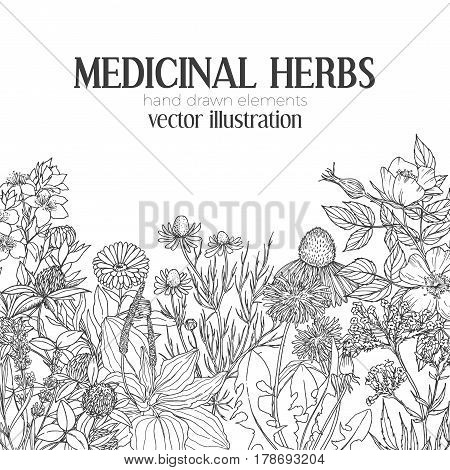 Card template with vintage sketches of medicinal herbs and flowers on the bottom, place for text, vector illustration. echinacea, chamomile, lavender, calendula, clover, dandelion, st john's wort, plantain, dog rose and valeriana