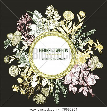 Dark background, vintage round rope wicker frame surrounded by medicinal herbs and flowers, color vector vintage sketch illustration, echinacea, chamomile, lavender, calendula, clover, dandelion, st john's wort, plantain, dog rose and valeriana