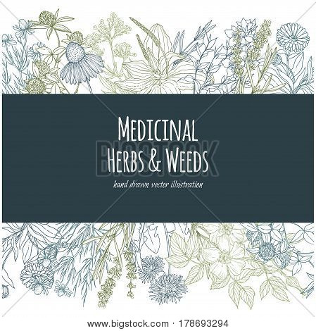 Horizontal banner with color medicinal flowers and herbs on white background, vector illustration, sketch style, echinacea, chamomile, lavender, calendula, clover, dandelion, st john's wort, plantain, dog rose and valeriana
